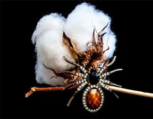 Cotton Boll  Annie Jackson