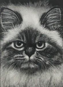 Crazy Cat Deanne Ellison, Student