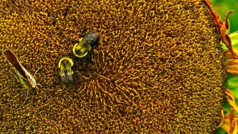 Butterflies and Bees Susan K. Friedland, Member