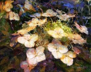 Don Yaun Oak Leaf Hydrangea 2nd Place 2D Category