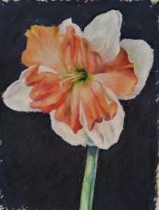 Rae Prall Daffodil