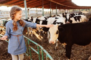 young white female petting a baby calf outside