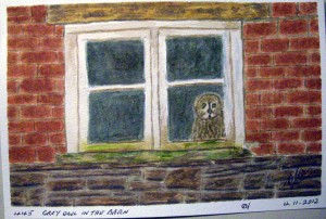 445 GREY OWL