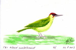 521 GREEN WOODPECKER