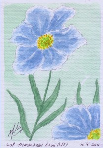 608 HIMALAYAN BLUE POPPY