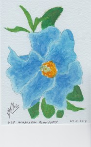 638 HIMALAYAN BLUE POPPY