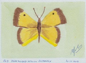 833 DARK CLOUDED YELLOW BUTTERFLY
