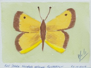 835 DARK CLOUDED YELLOW BUTTERFLY