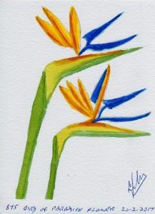 875 BIRD OF PARADICE FLOWER