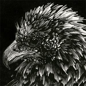 eaglet wood engraving