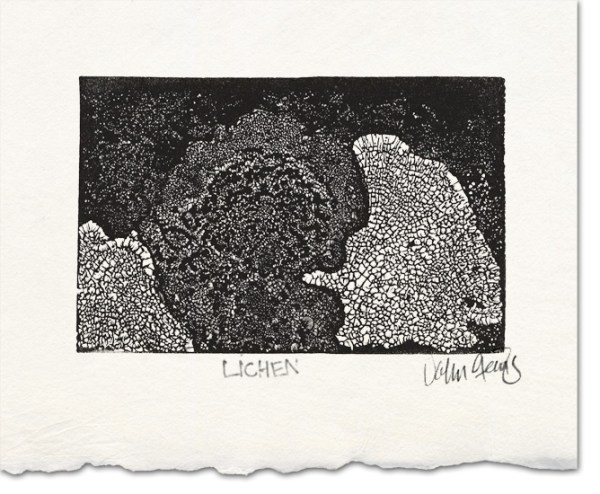 lichen wood engraving