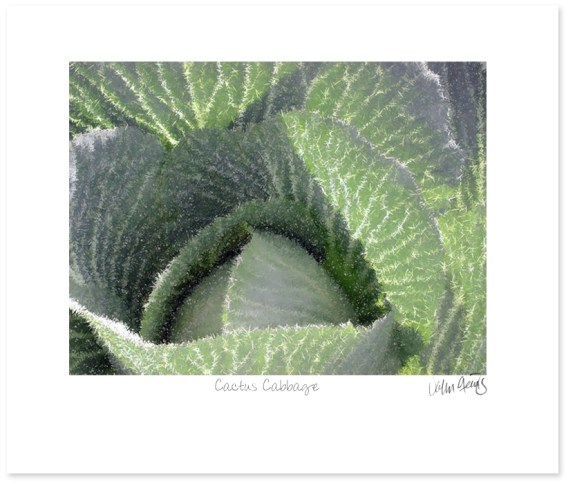 Cactus Cabbage - a photo by John Steins edited in a vector program