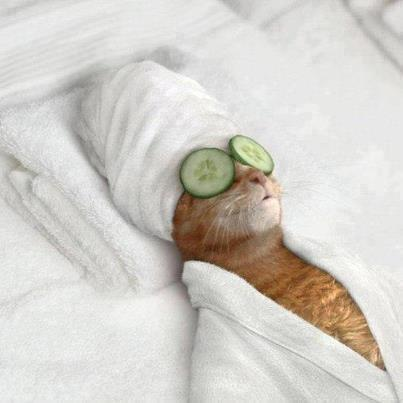 Cute Kitten Spa - Funny Pic