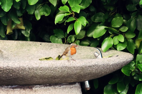 cute-little-robin