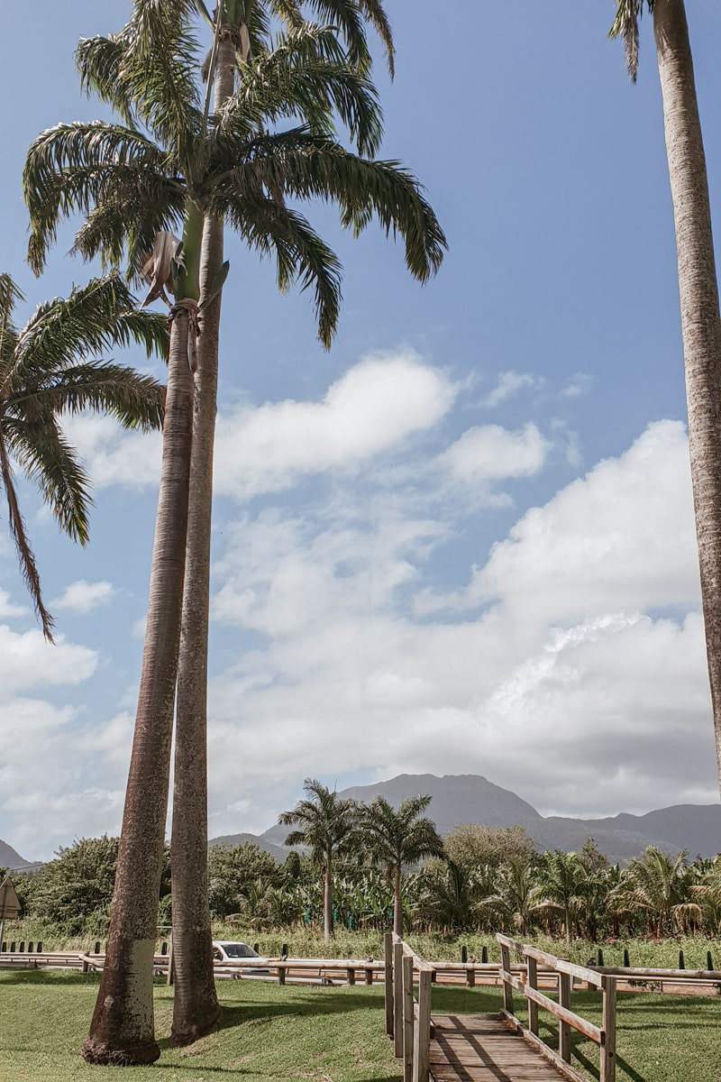 Guadeloupe : mes incontournables pour visiter l'île papillon - allée Dumanoir