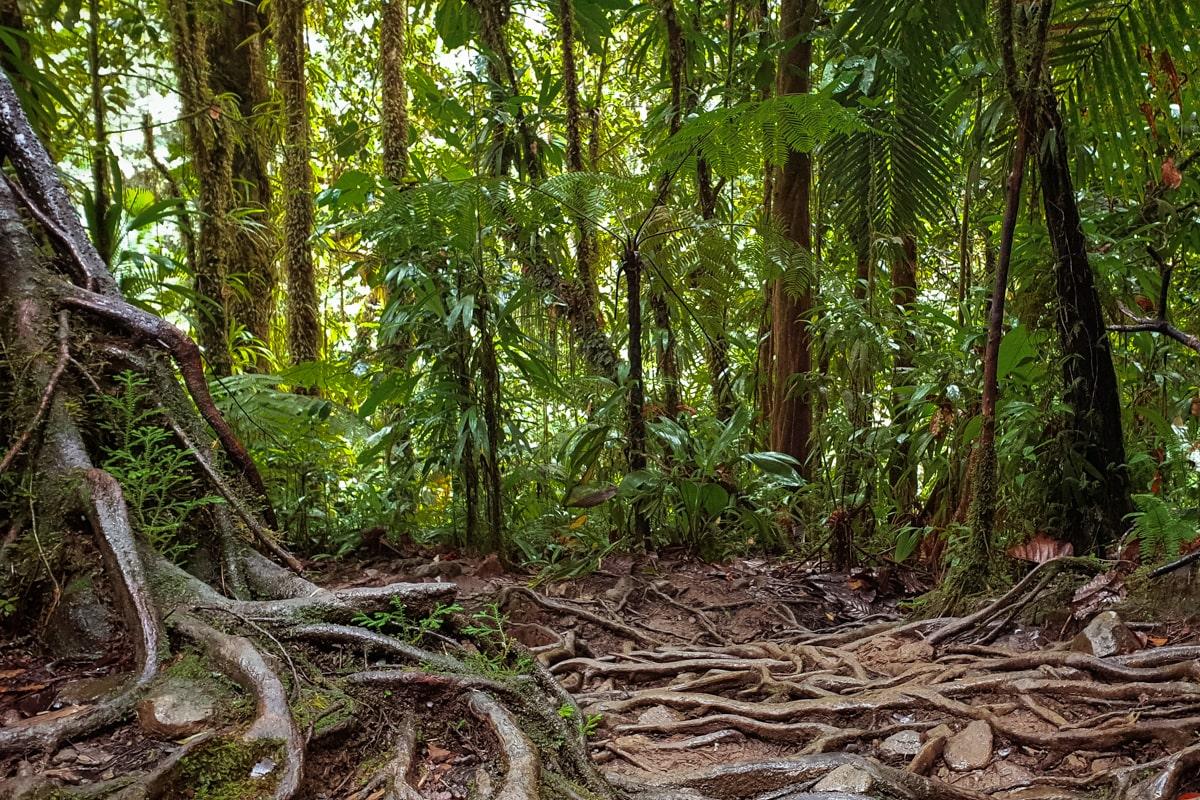Guadeloupe : mes incontournables pour visiter l'île papillon - bassin Paradis | Jolis Carnets