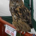 Hold An Eagle Owl For Three Pounds