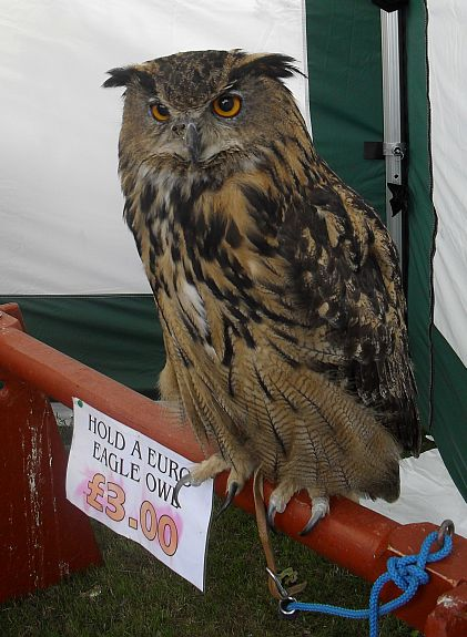 Hold this Eagle Owl for three pounds