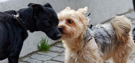 dogs-4636638_640