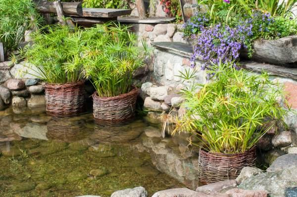 building water garden rapid city