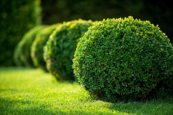 bushes and shrubs gardener