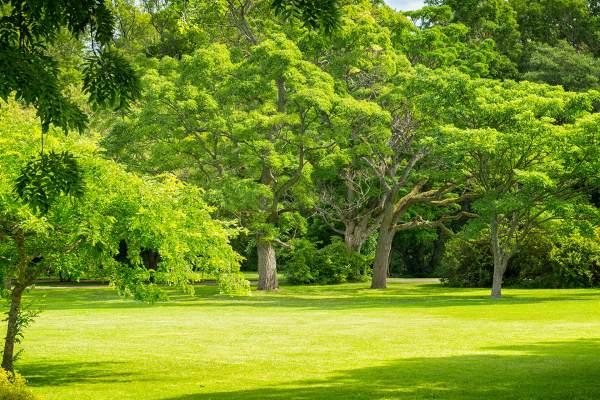 deciduous tree landscape design