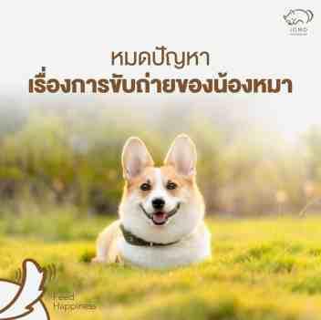 หมาคอร์กี้ยิ้มกว้างสุขภาพดีบนทุ่งหญ้าสีเขียว