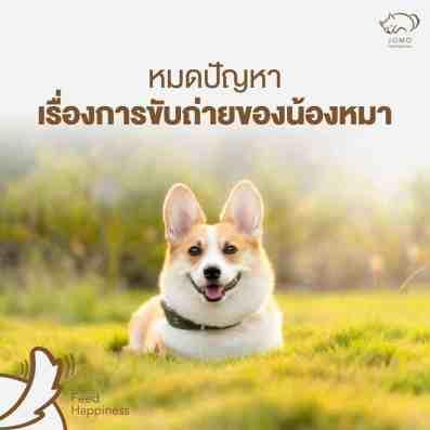 สุนัขสุขภาพดี ลดปัญหาการขับถ่าย
