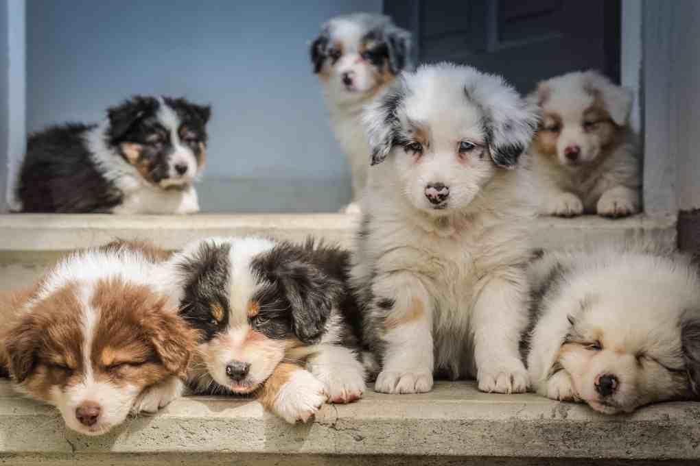 ลูกหมาหลายสีหลายตัวกำลังนั่งและนอนบนพื้นสีเทา