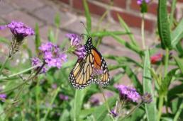 Butterfly in Prescott Park