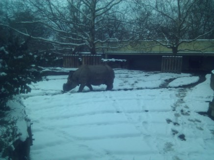 After the Technikmuseum I went to the Zoologischer Garten Berlin (Berlin Zoological Garden). My main camera ran out of power here, so I had to use my backup cell phone camera, with its blue-heavy sensor. In any case, this is a picture of what must be a very cold rhino. :)