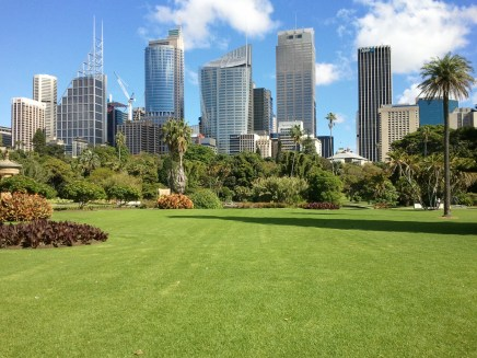 The Sydney CBD, as seen from the Domain. The beauty of each seemed to complement the other.