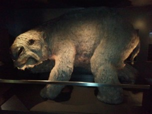 The Australian Museum's full-scale model of a diprotodon, the largest marsupial known. Extinct now, they are thought to have grown to 10 ft in length, weighing up to 6200 lb!