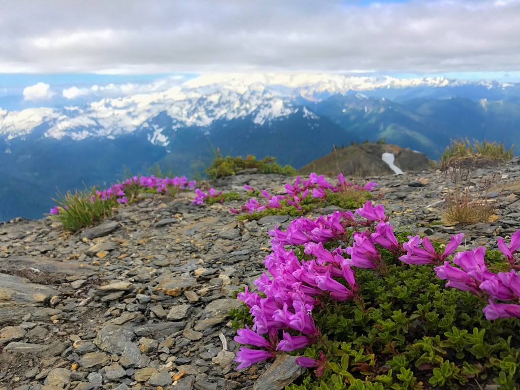 Wildflowers at the summit