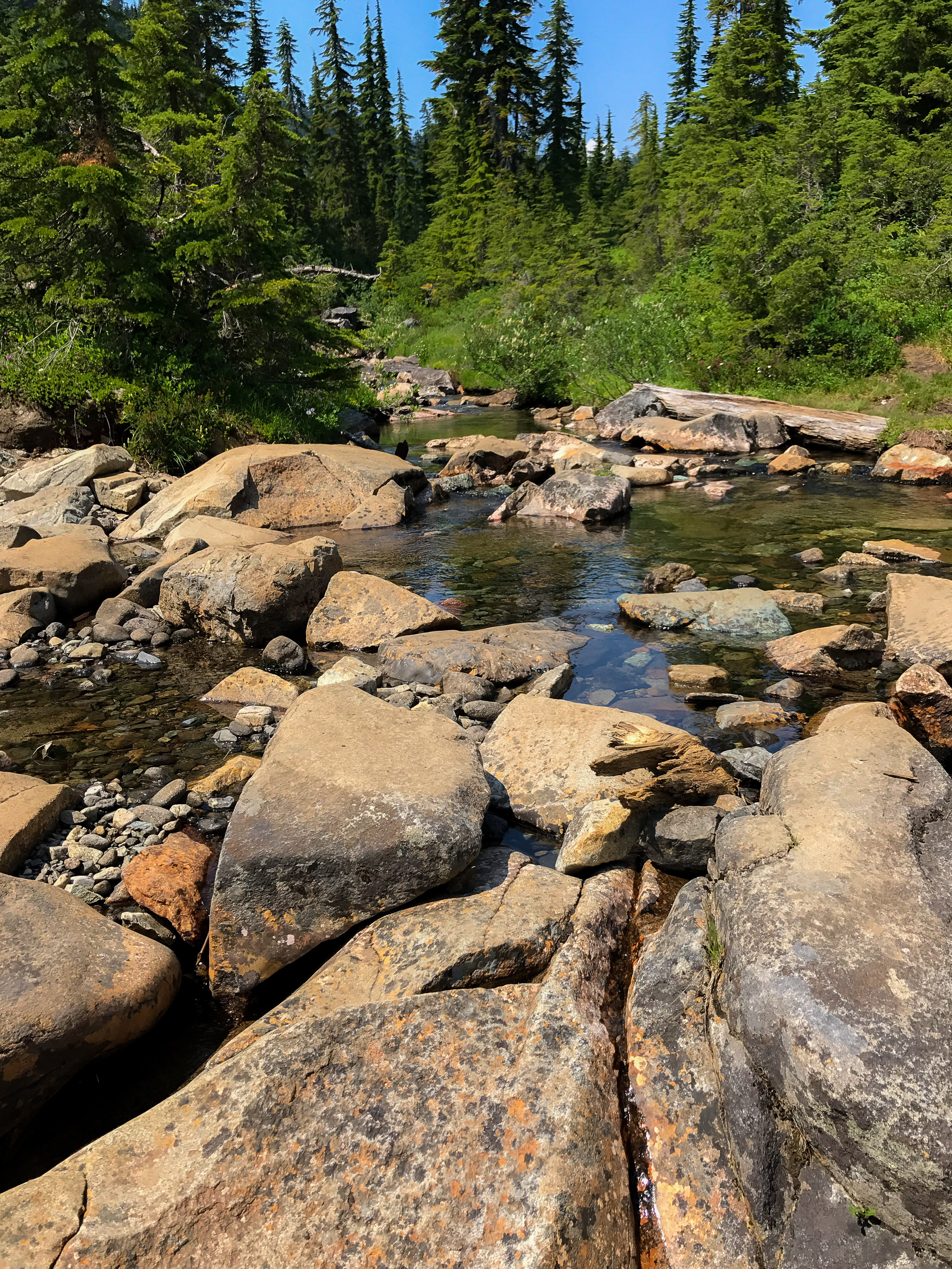 One of the many streams in the meadow. Great place to cool off!