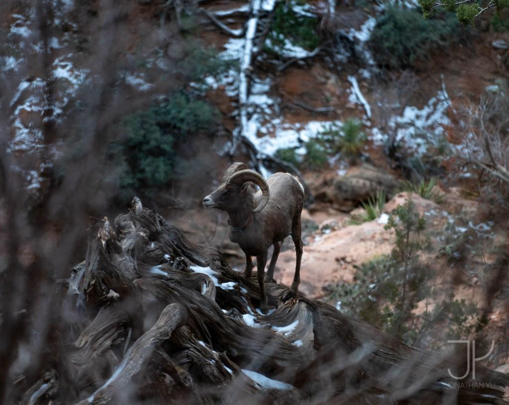 zion national park winter wildlife