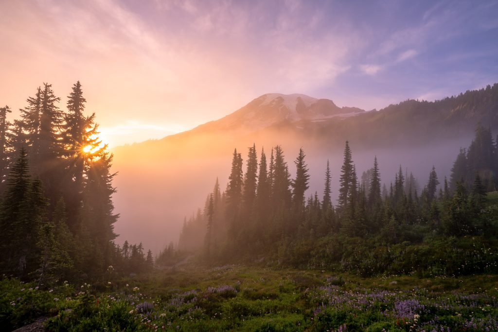 Wildflowers glow during sunset at Mount Rainier National Park