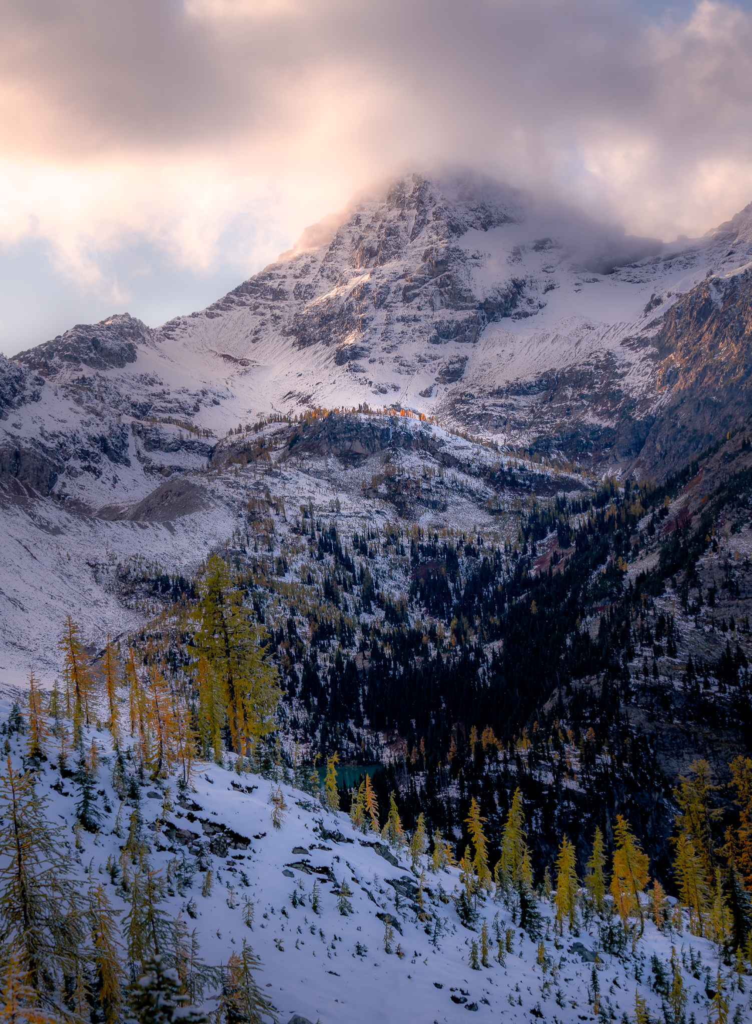 Beautiful larches coated with fresh snow in the North Cascades