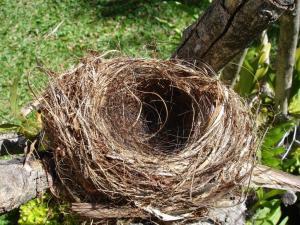 Image for Jones Myers Blog - Empty Nest
