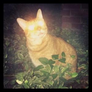 Lou is an alien cat