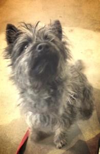 Dorothy's dog