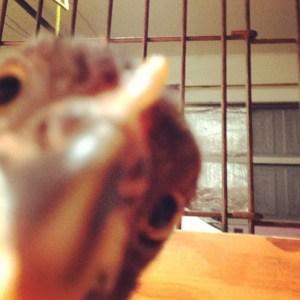 BlogPaws and chicks
