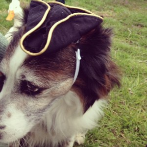 Pirate hat on a dog