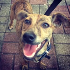 Smiling dog loves Jones Chews