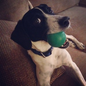 Handsome dog with a ball