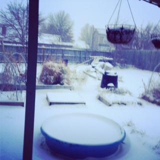 A snowy back garden