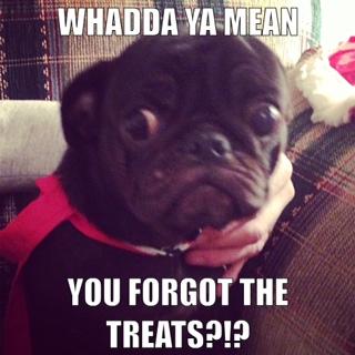 A slightly worried Pug