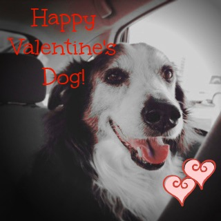 Happy Valentine's Dog, naturally