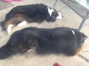 Snoozing Aussies