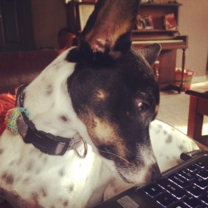 Licking the laptop